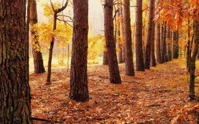 Arriva l'autunno… cadono le foglie e non solo