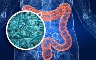 Microbiota intestinale: L'organo dimenticato che nessuno sa di avere